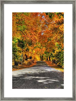 Country Lane In Fall Framed Print by Linda Covino