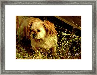 Country Life Framed Print by Cassandra Buckley