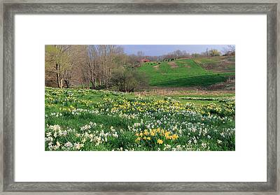 Country Spring Framed Print by Bill Wakeley
