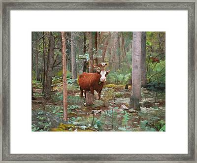 Cows In The Woods Framed Print by Joshua Martin