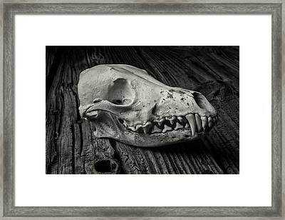 Coyote Skull In Black And White Framed Print by Garry Gay