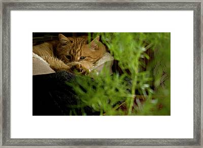 Cozy Cat Framed Print by ShaddowCat Arts - Sherry