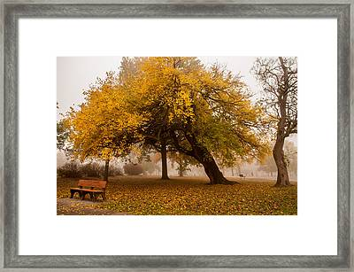 Cozy Framed Print by Joe Scott