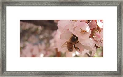 Crab Apple Bee Framed Print by Luke Cain