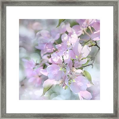 Crab Apple Blossoms Square Format Framed Print by Theresa Tahara