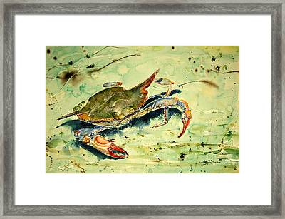 Crabby Appleton Framed Print by Shirley Sykes Bracken