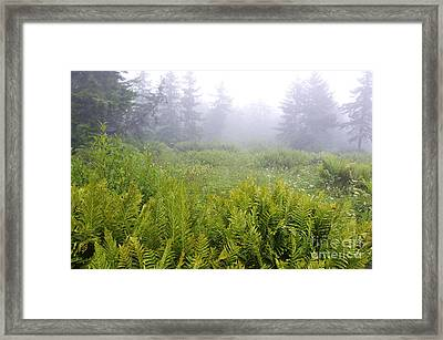 Cranberry Glades Early Morning Framed Print by Thomas R Fletcher