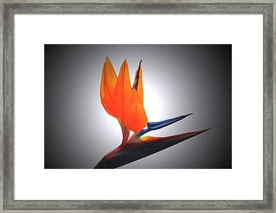 Crane Flower Portrait Framed Print by Terence Davis