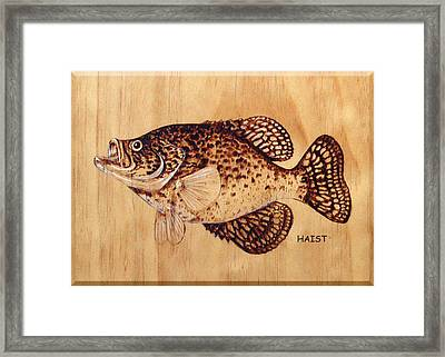 Crappie Framed Print by Ron Haist
