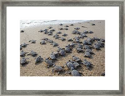 Crawl To The Ocean Framed Print by Mary Wozny