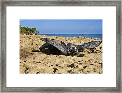 Creating Camouflage  Framed Print by Sarita Rampersad