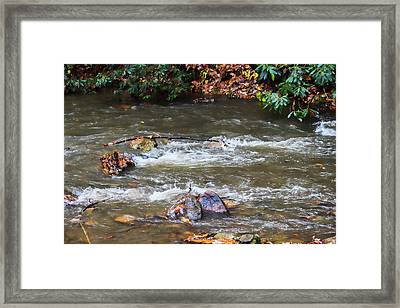 Creek Bed Framed Print by Roberta Byram