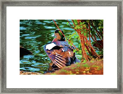 Creek Side Framed Print by Helen Carson