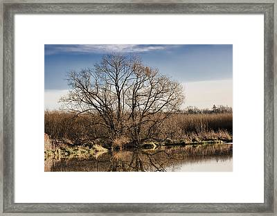 Creek Tree Framed Print by Leif Sohlman