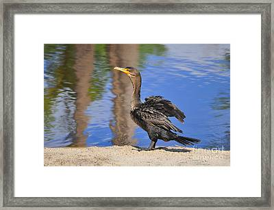 Creekside Cormorant Framed Print by Al Powell Photography USA