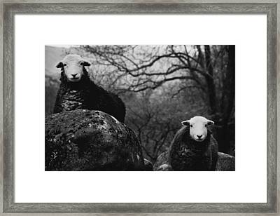 Creep Sheep Framed Print by Justin Albrecht