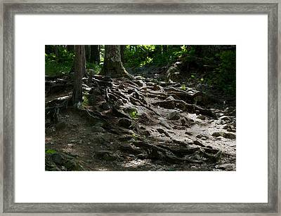 Creeping Roots Framed Print by Kendall Tabor