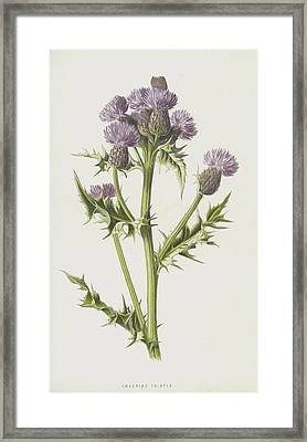 Creeping Thistle Framed Print by Frederick Edward Hulme