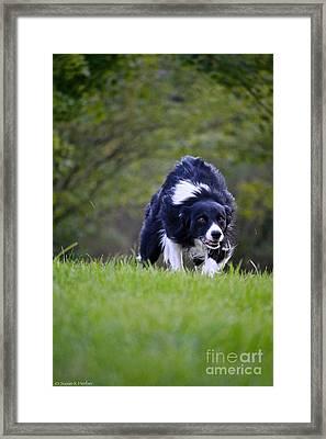 Creeping Up Framed Print by Susan Herber