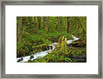 Crescent Rainforest Stream Framed Print by Adam Jewell
