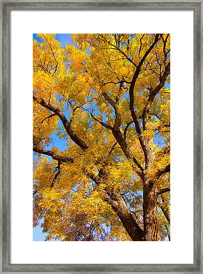 Crisp Autumn Day Framed Print by James BO  Insogna