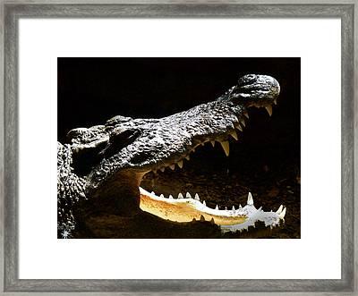 Crocodile Framed Print by Scott Hovind