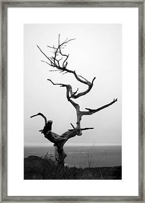 Crooked Tree Framed Print by Matt Hanson