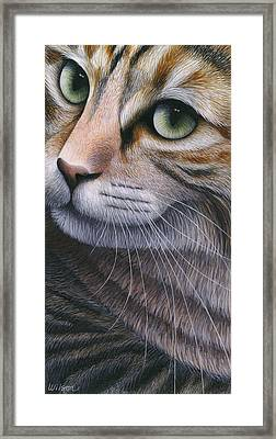 Cropped Cat 2 Framed Print by Carol Wilson