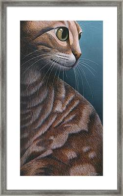 Cropped Cat 3 Framed Print by Carol Wilson
