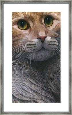 Cropped Cat 4 Framed Print by Carol Wilson