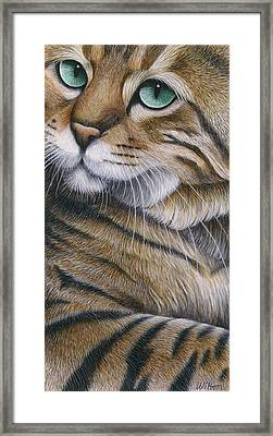 Cropped Cat 6 Framed Print by Carol Wilson