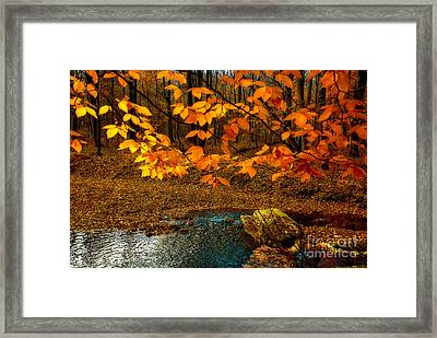 Crossing Over Framed Print by Lois Bryan