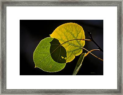 Crossing Over Framed Print by Mitch Shindelbower