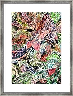 Croton Tropical Art Print Framed Print by Derek Mccrea