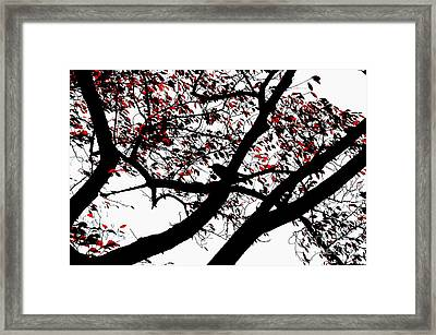 Crow And Tree In Black White And Red Framed Print by Dean Harte