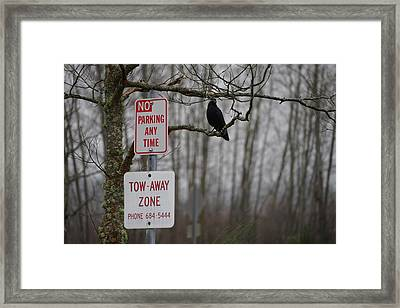 Crow Asking For A Citation In Magnuson Park In Seattle Framed Print by Shirley Stevenson Wallis