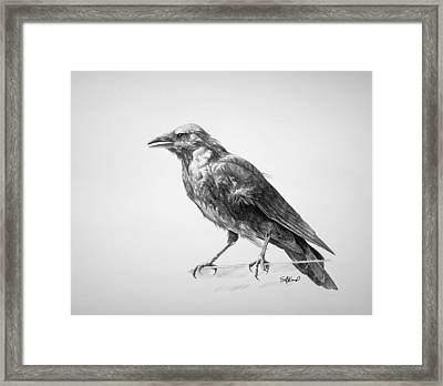 Crow Drawing Framed Print by Steve Goad