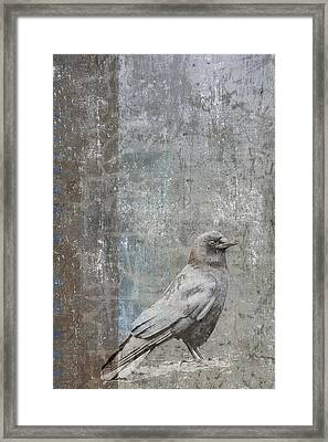 Crow In Grey Flannel Framed Print by Carol Leigh