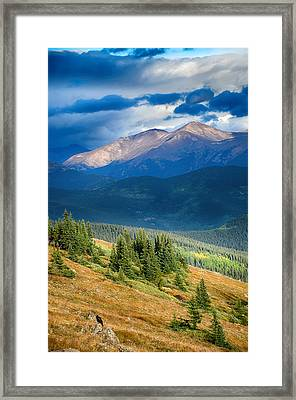 Crow On A Mountainside Framed Print by Angelina Vick