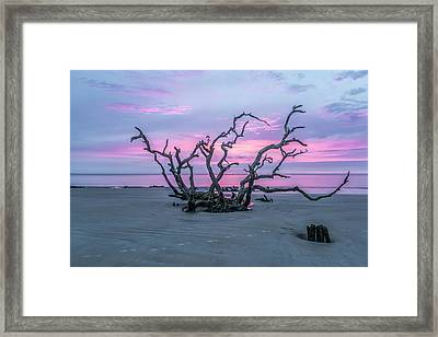 Crown Of Thorns Framed Print by Jon Glaser