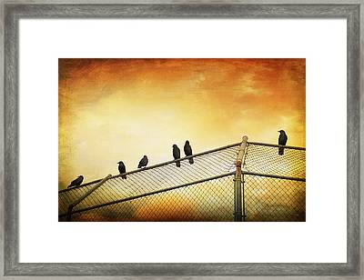 Crows On The Backstop Framed Print by Theresa Tahara