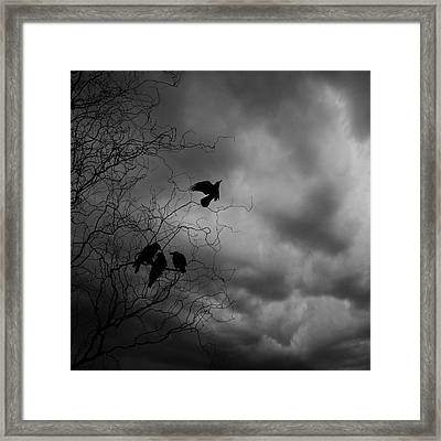 Crows Framed Print by Cambion Art