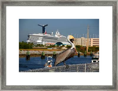 Cruising Pelican Framed Print by Susanne Van Hulst