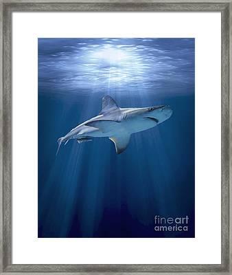 Cruising Shark Framed Print by Liz Molnar