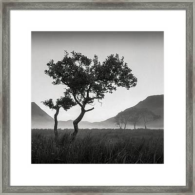 Crummock Water Tree Framed Print by Dave Bowman