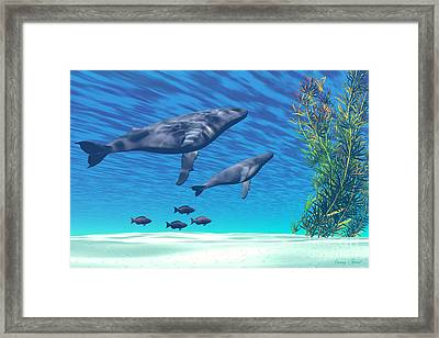 Crystal Clear Framed Print by Corey Ford