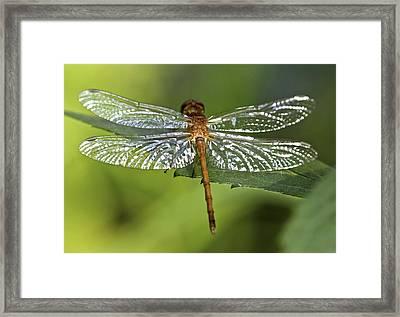 Crystal Wings Framed Print by Evelina Kremsdorf