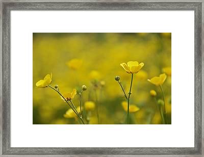 Cups Of Sunshine Framed Print by Odd Jeppesen