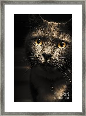 Curious Cat Watching From The Shadows Framed Print by Jorgo Photography - Wall Art Gallery