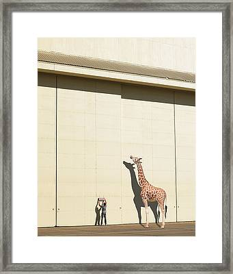Curious Giraffe Framed Print by Richard Newstead